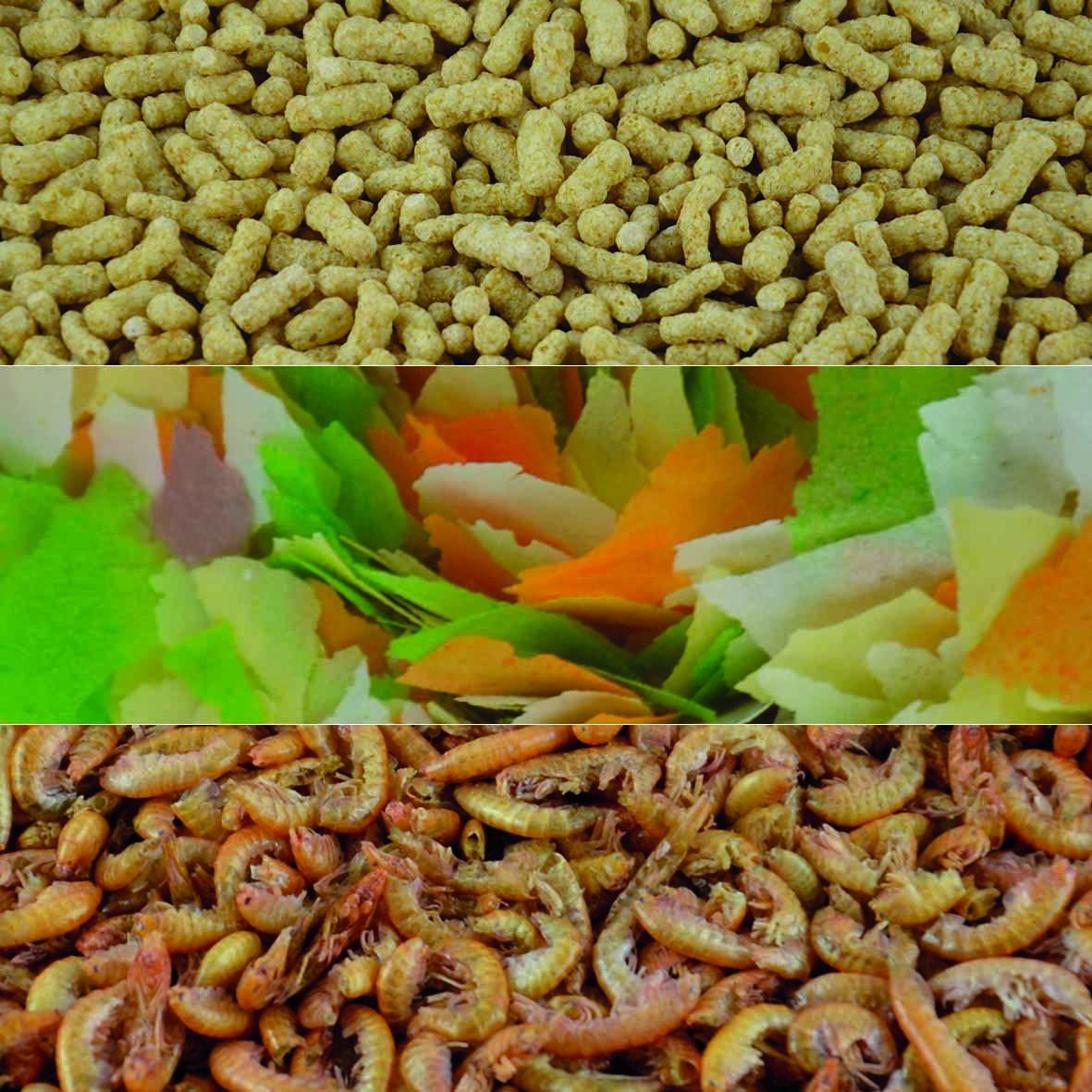 Tipps Zum Kauf Von Teichfutter Was Zu Beachten Ist