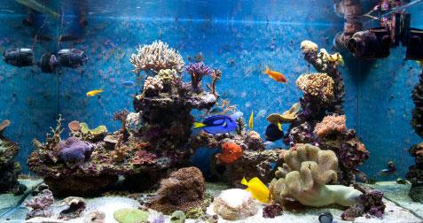 Aquarium fertig eingerichtet