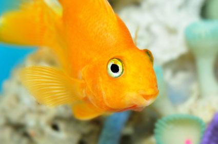Gut gefiltertes Aquarium