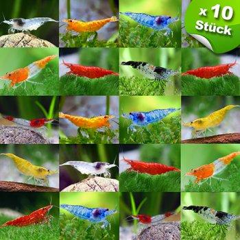 Garnelenmix - verschiedene Farben - 10 Stück -