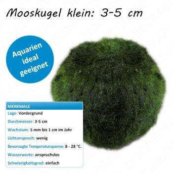 Mooskugel klein: 3-5 cm
