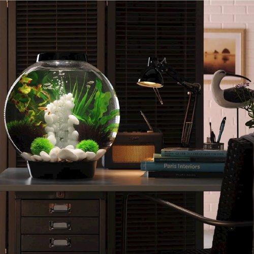 biorb classic 60l kaltwasser komplett aquarium. Black Bedroom Furniture Sets. Home Design Ideas
