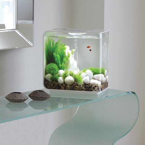 Biorb Flow 30 Liter Aquarium Bei Bachflohkrebse De