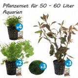 Pflanzenset für 50 - 60 Liter Aquarien