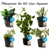 Pflanzenset für  60 Liter Aquarien