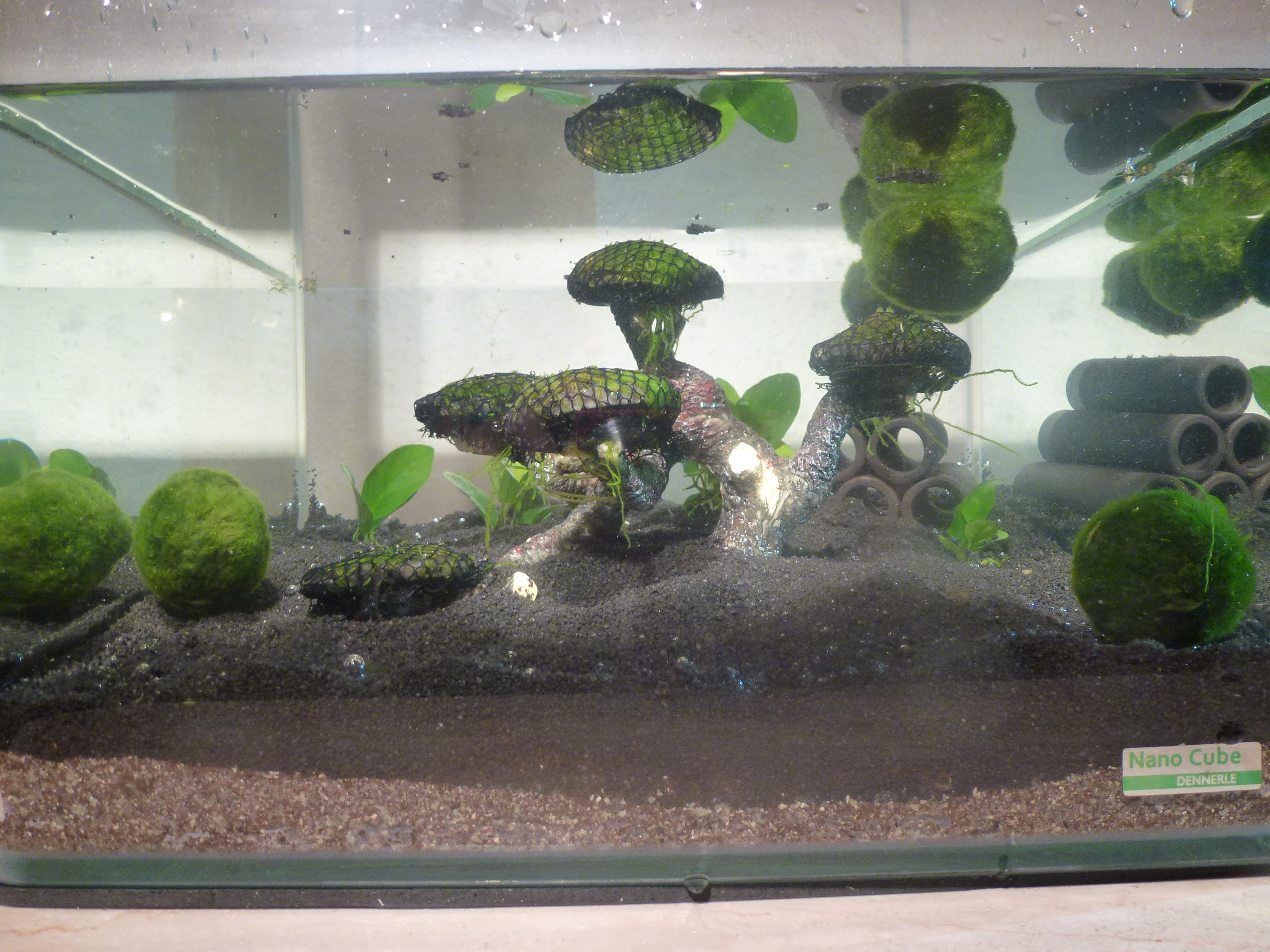 Tutorial garnelen aquarium einrichten teil 1 for Aquarium einrichtungsideen