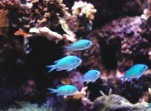Hohe Wasserqualität im Aquarium