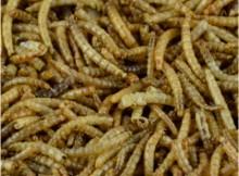 Mehlwürmer Futter getrocknet
