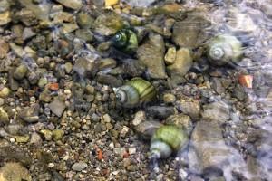 Schnecken im Wasser