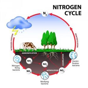 Stickstoffkreislauf in der Natur