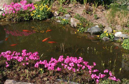 Fischfutter Fur Goldfische Im Aquarium Und Teich Richtig Futtern