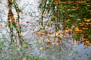 Teich mit Laub