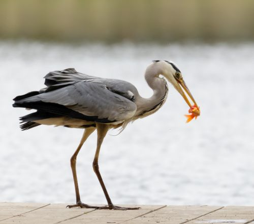 Laubschutznetz teichabdeckung vogelschutznetz bei for Teichfische die algen fressen