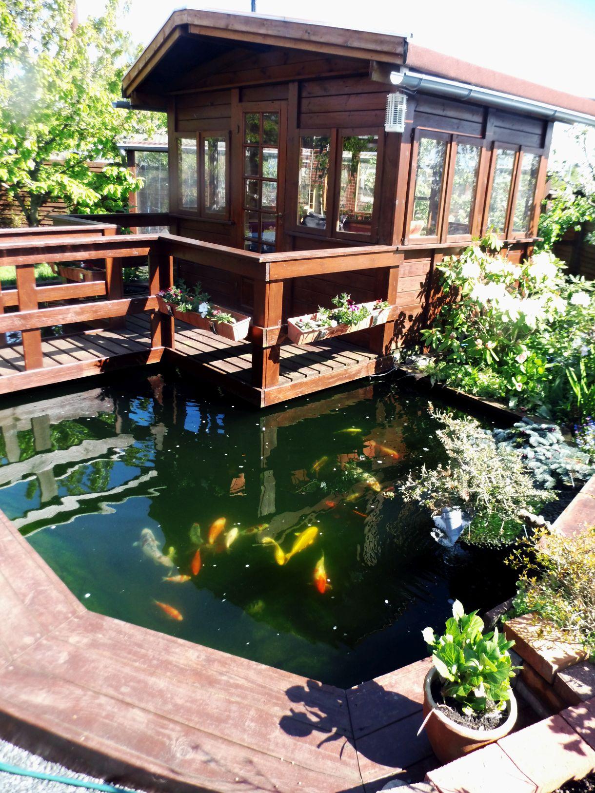 Algenwachstum vorbeugen algen in schach halten - Gartenteich abdeckung ...
